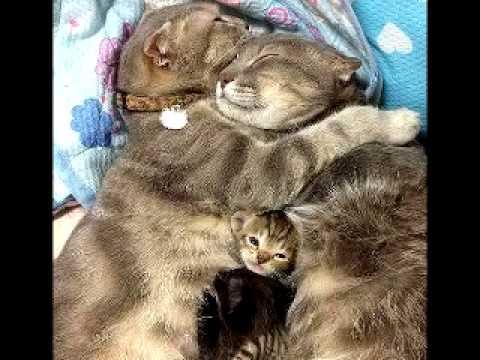 Самые смешные котята и кошки и коты
