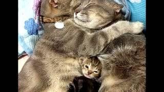 Самые смешные кошки и собаки, котята, щенки прикольные веселые смех. 2015 год