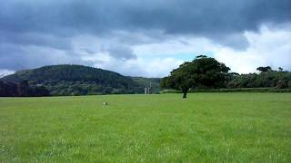 Staffordshire Bull Terrier X Border Collie At Margam Park Wales
