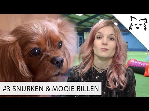 OnneDi ziet mooie BILLEN & hond snurkt door Jennifer Ewbank heen - #3 FikkieTV Agility