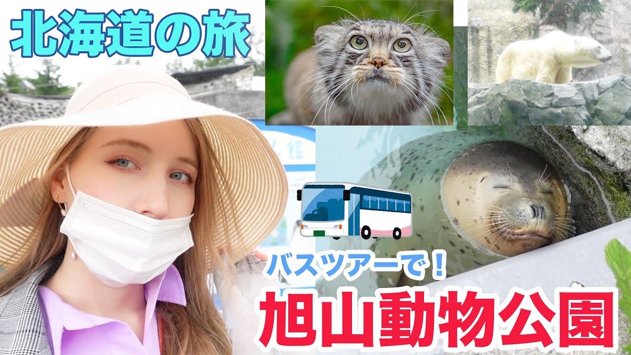 バスツアーであの旭山動物公園へ!どんな動物たちに出会えるの?北海道ならではの動物を意外な角度からも?【あしやの北海道の旅】