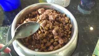 THE DOGS FEEDING ROUTINE
