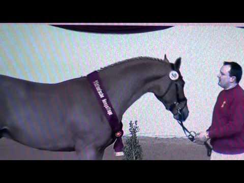 Stallions SudDeutsche  2014 film