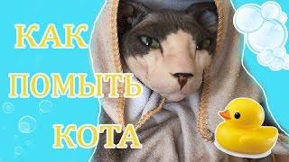 КАК ПОМЫТЬ КОТА ^ МОЕМ ЛЫСОГО СФИНКСА