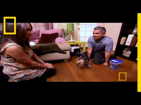 Blind Terrier | Dog Whisperer