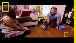 Dog Whisperer: Blind Terrier