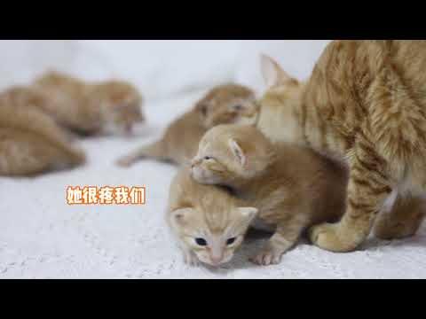不靠譜貓媽總壓住小貓,但是餵奶時1個小動作,讓主人意外感動!