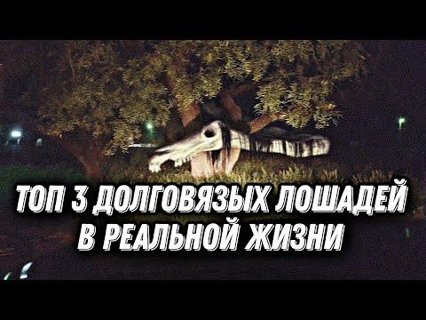 Топ 3 Долговязых Лошадей в реальной жизни / Long Horse в реальной жизни