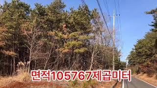 전원주택, 펜션개발용 토지임야/옹진군 영흥도 숲속