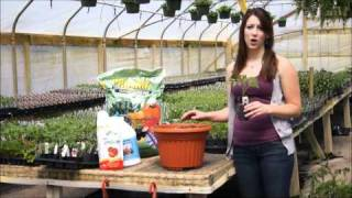how to transplant your tomato plants