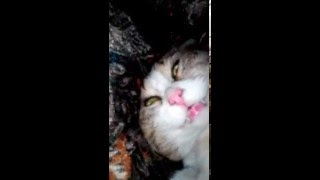 Кот смешно спит