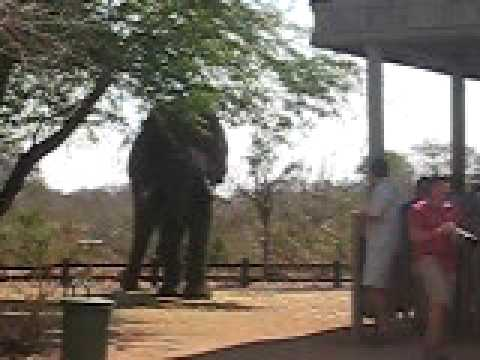 Elephant in Picnic Spot in Kruger National Park  YouTube