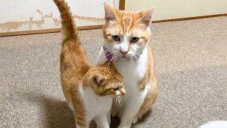 新入り子猫からの愛に戸惑う先住猫