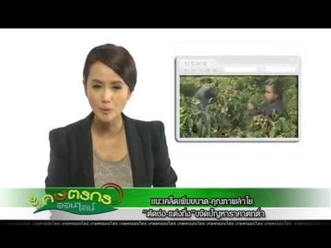 รายการเกษตรกรออนไลน์ ตอนเครื่องขึ้นรูปกระทงใบตอง ออกอากาศ 08/05/57 เทป202 B1