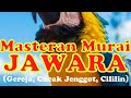 Masteran Murai Juara Mix Burung Gereja Cucak Jenggot Cililin  Mp3 - Mp4 Download