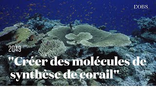 Une idée pour sauver les océans : créer des molécules de synthèse provenant des coraux