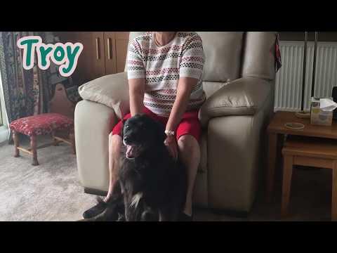 Dogs Trust West Calder - Troy