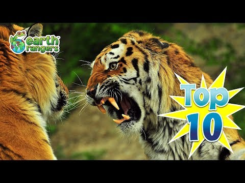 Top 10: Funny Halloween Animals