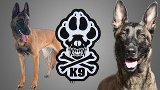 The TRUTH about Police K-9 Training