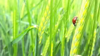 Lady bug. Shot on Samsung Galaxy S6