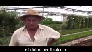 Piante che curano, Piante proibite - Lepidium latifolium