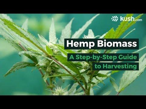Hemp Biomass: A Step-by-Step Guide to Harvesting   Kush com