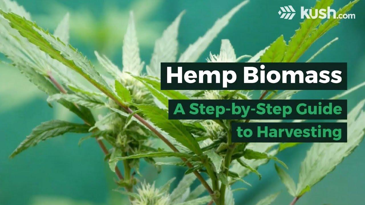 Hemp Biomass: A Step-by-Step Guide to Harvesting | Kush com