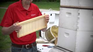 How to Start Beekeeping: Building a Beehive