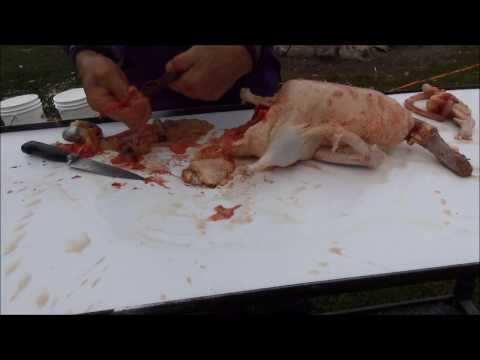Day 1 Of The Dreaded Cull & How To Kill, Clean, Gut & Butcher A Duck #202 Raising Ducks Day 121