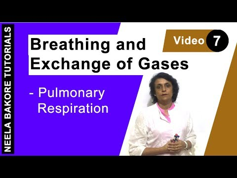 Breathing and Exchange of Gases - Pulmonary Respiration