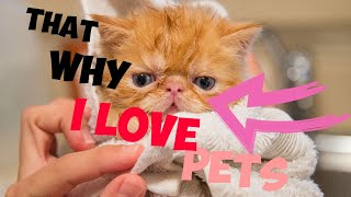Funny Animals And Cute Pets Compilation #1 Pets Lover