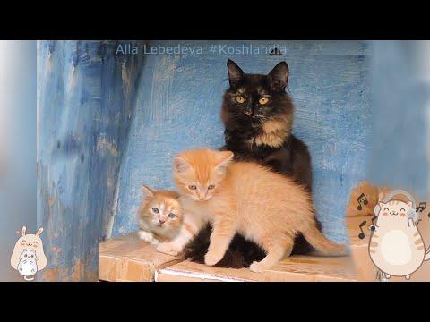Мама Гоша и #котята Gosha- Mom With #kittens
