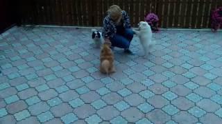 """Гостиница для собак в Москве """"Леруа Марин"""""""
