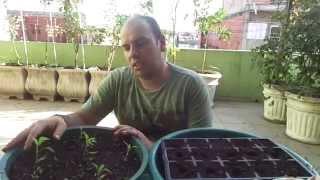 Como germinar sementes para o cultivo em vasos