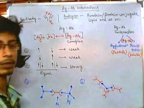 Antigens and antibodies