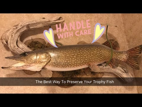 How To Freeze Your Trophy Fish For Mounting / Taxidermy. The Best Way To Preserve / Store Fish.