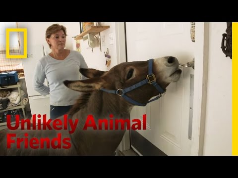 Just a Bit of Donkey Love | Unlikely Animal Friends