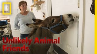 Just a Bit of Donkey Love | Unlikely Animal Friends thumbnail