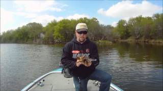 Video caloosahatchee river 7 4 2lbs zoom fluke 001 for Caloosahatchee river fishing
