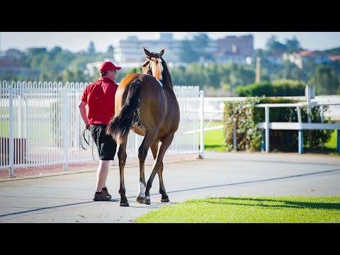 2019 Perth Yearling Sale - Day 1 (Live Stream Archive)