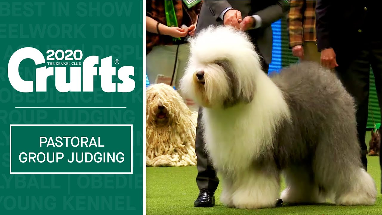 Pastoral Group Judging Crufts 2020 Youtube