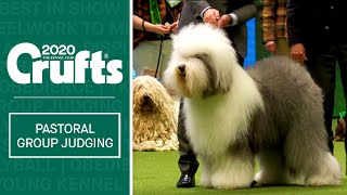 Pastoral Group Judging | Crufts 2020
