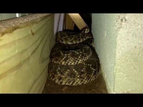 إذا كنت ترهب الثعابين ..فلا تشاهد هذا الفيديو  - نشر قبل 2 ساعة