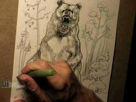 drawing a big roaring bear youtube