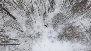 охота с лайкой на лося с квадрокоптера