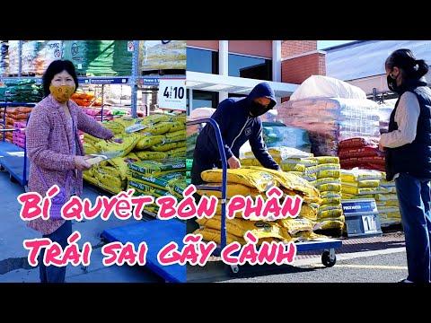 Bí quyết dùng phân bón này cây cho TRÁI trĩu cành, rau cải xanh tốt - người Việt ở Mỹ