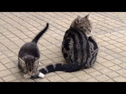Cat and Kitten Vs Tail Compilation 2017 - Funny Cats Video