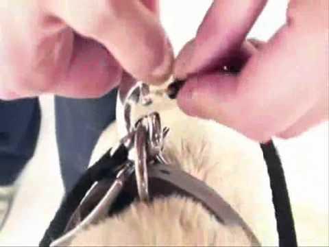 Поводок рулетка для собак Flexi