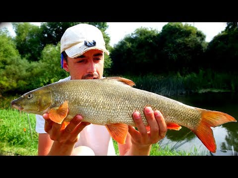 Barbel Fishing The River Avon
