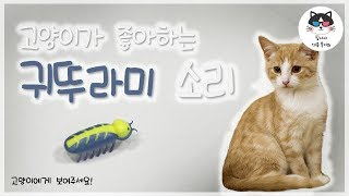 [고양이가 좋아하는 영상] 심심한 고양이 놀아주기! 귀뚜라미 울음소리를 들려주세요!/Video for cat to watch, cricket video for your cat!
